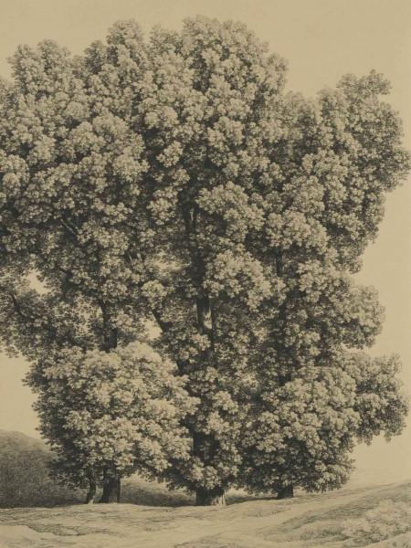 Die Zeichnungen und Aquarelle des 19. Jahrhunderts in der Graphischen Sammlung der Staatsgalerie Stu