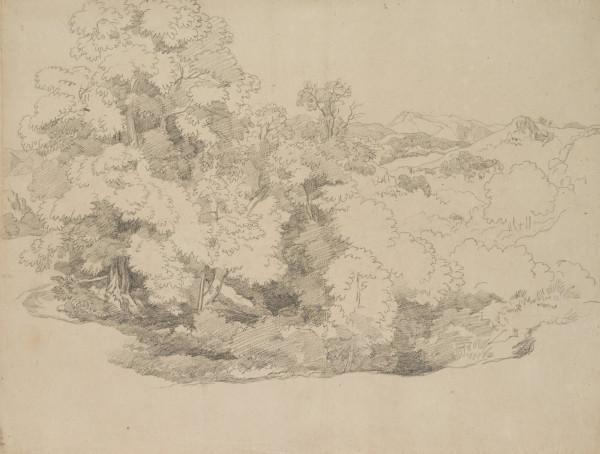 Skizze einer Baumgruppe im Gebirge
